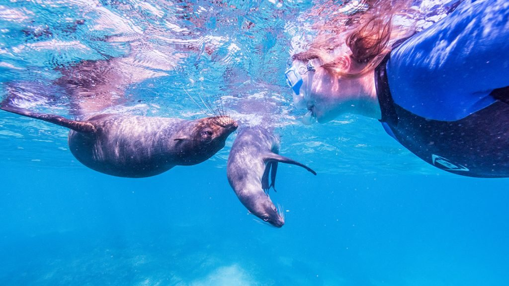 Top Family Adventure Vacations in the World | Islote Pitt, Galapagos