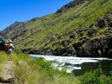 Rapid Musings: Wild Sheep in Idaho's Hells Canyon
