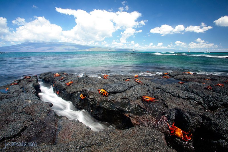 The Best Galápagos Books to Read Before You Go